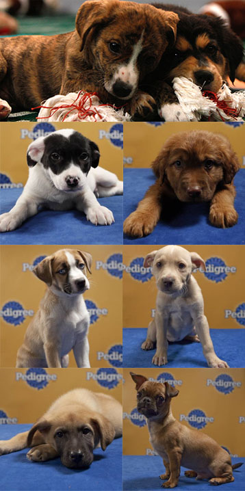 Super Bowl? OK. Puppy Bowl VI? Yes!